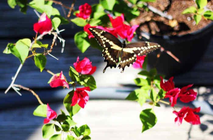 butterfly garden in a backyard landscape