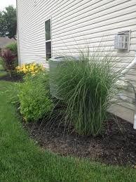Tallgrass, hosta plant and mulch around an air conditioning unit