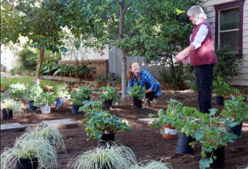 Two ladies replacing old plants in a flower garden