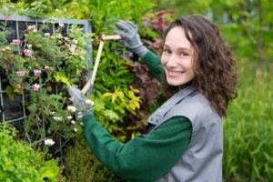 View of a young landscaper woman working on trimming some plants