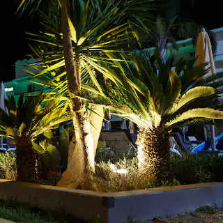 LED landscape uplighting illuminating palms at night
