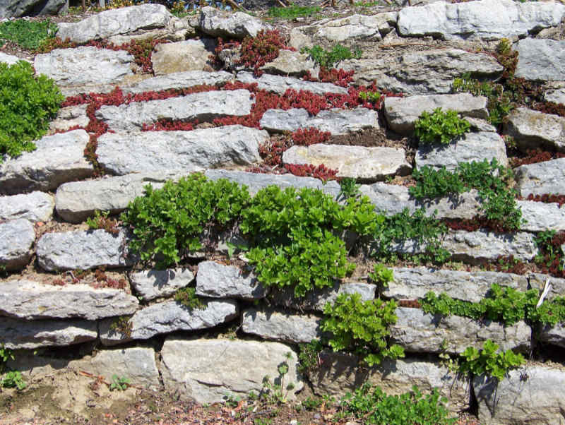 Plants growing in a retaining wall