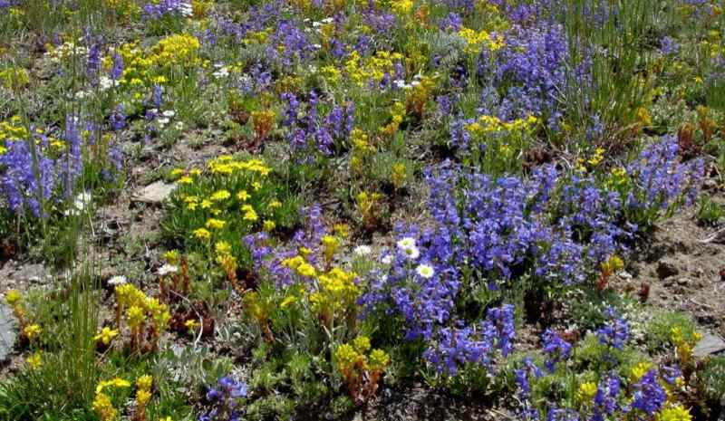Colorful flowers and plants on a hillside for the purpose of erosion control. on
