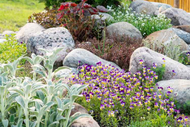 Blooming violets and other flowers in a small rockery in the summer garden.