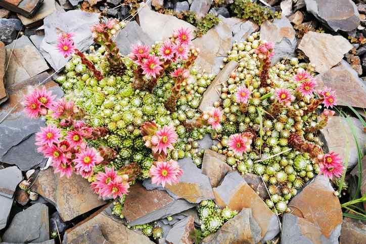 Heartland Landscape Group, Inc. 6386 Osage Beach Pkwy Osage Beach, MO 65065 (573) 302-8866 https://heartlandlandscape.com/