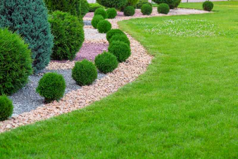 Landscape edging with a wave of ornamental cypress bushes, colored gravel, and mulch alongside a green lawn.